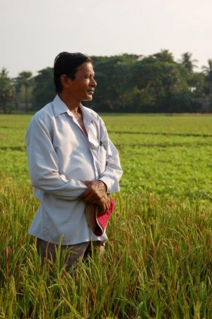 Farmer in rice paddy